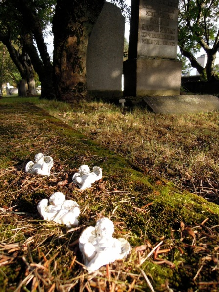 Tiny white angels in the fallen pine needles