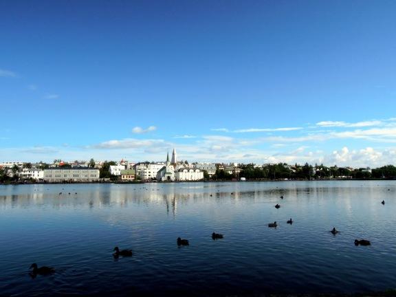 Ducks on Tjörnin, the city pond