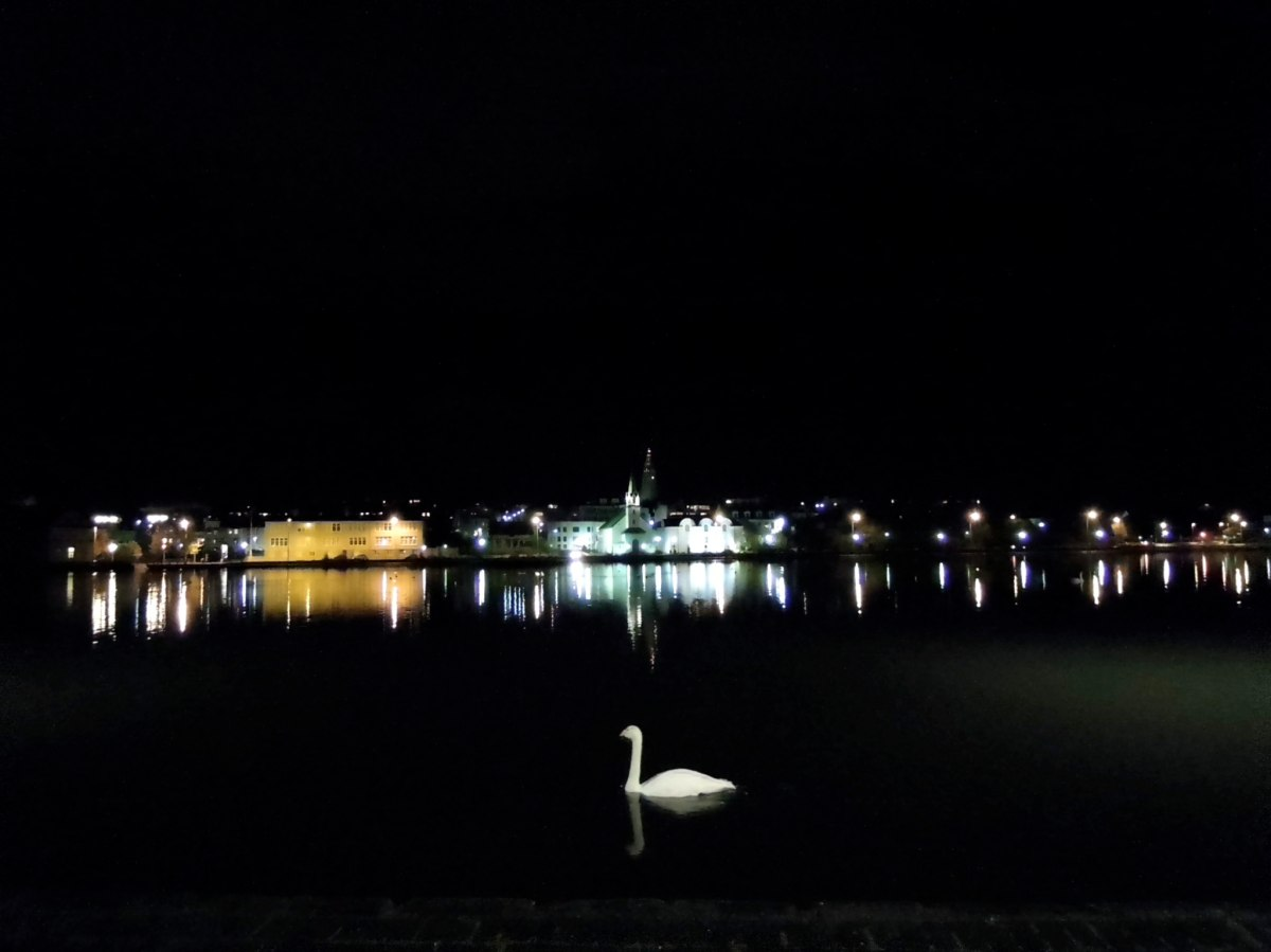 Swan on Tjörnin at nighttime