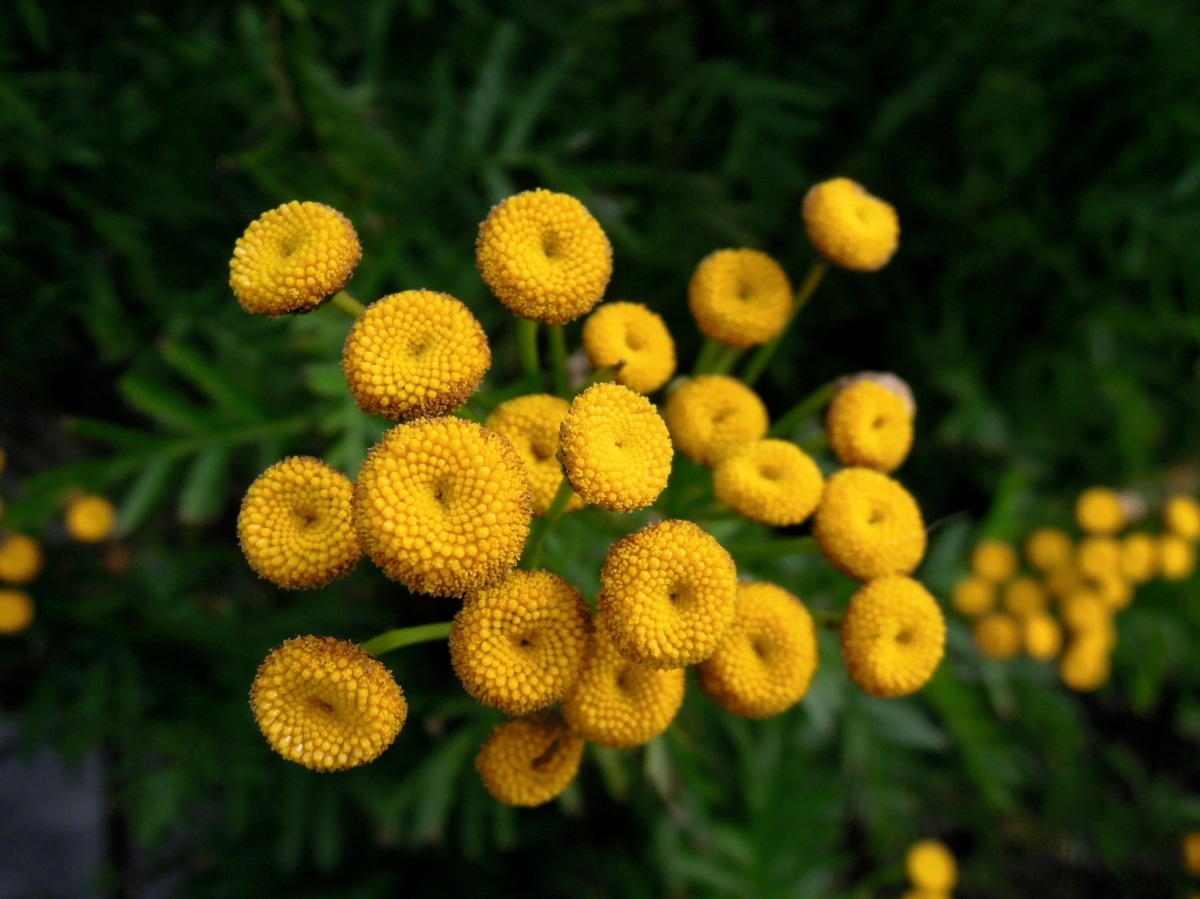 Yellow circles or flower centers