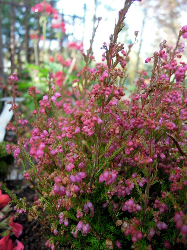 Different tiny pink flowers