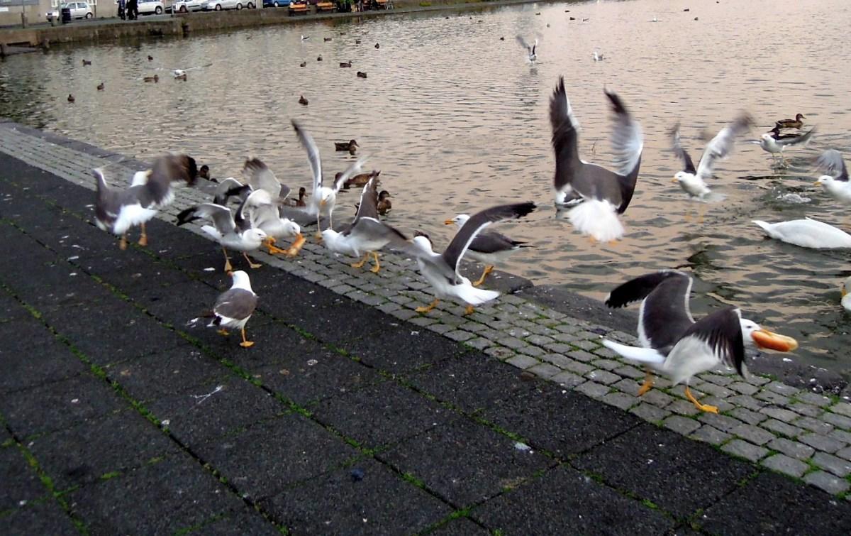 Seagulls on an abandoned hot dog bun