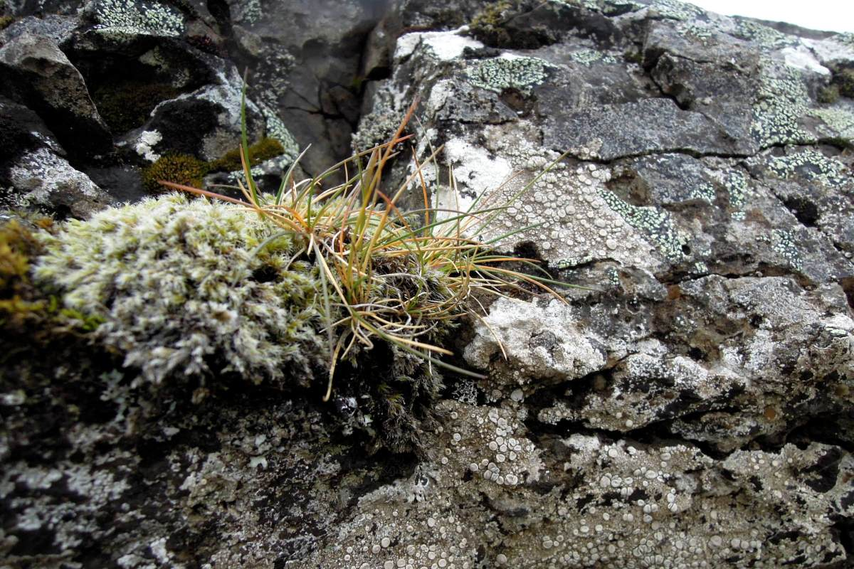 Mosses and lichens on rock