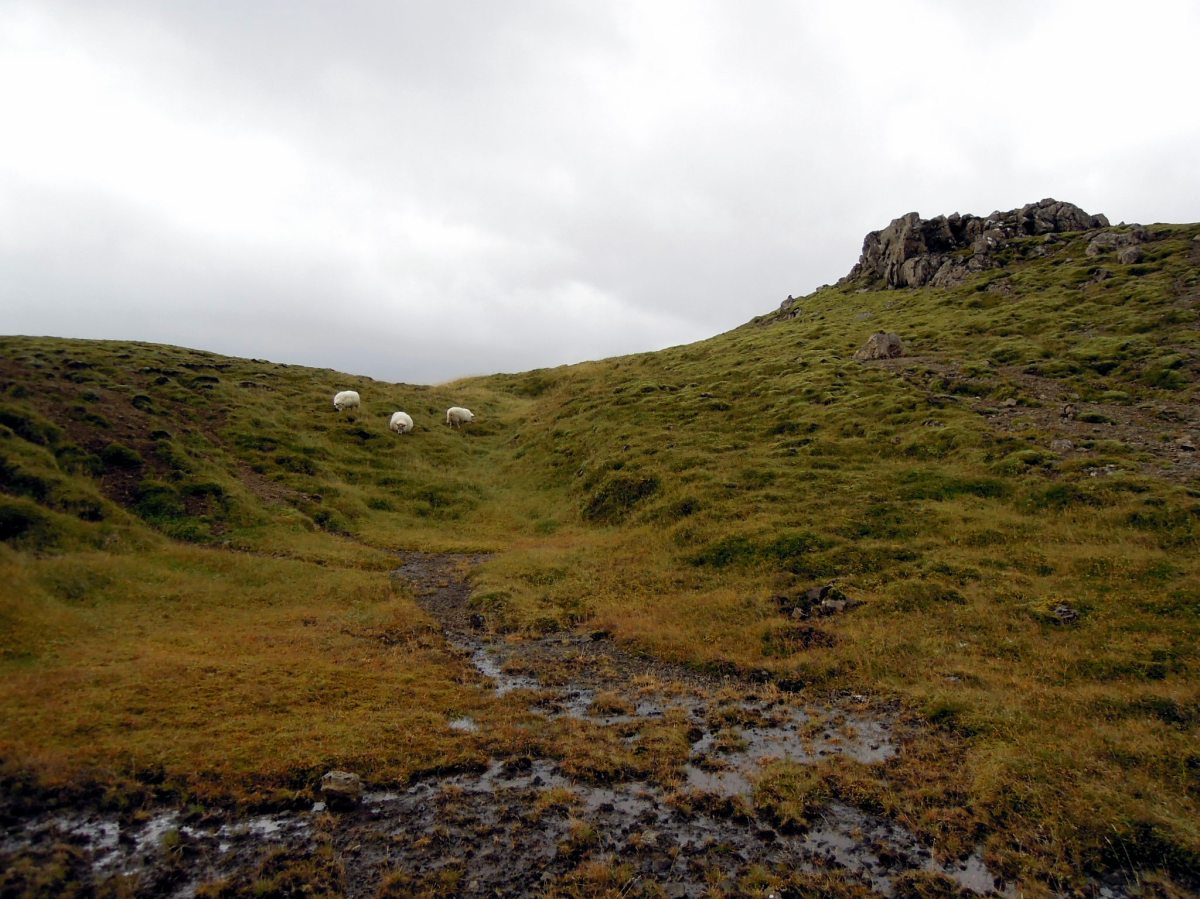 Sheep on a hilltop