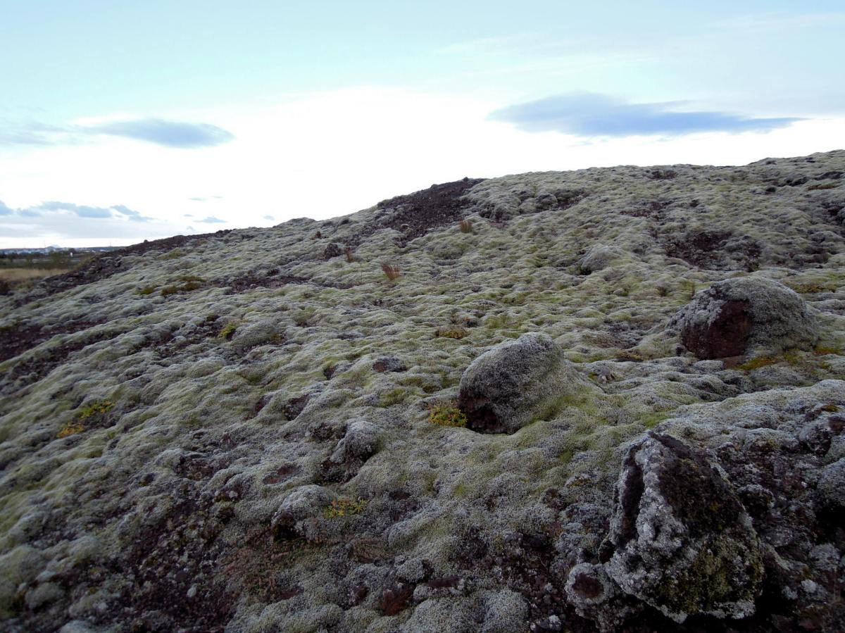 The deeply mossy boulder we climbed