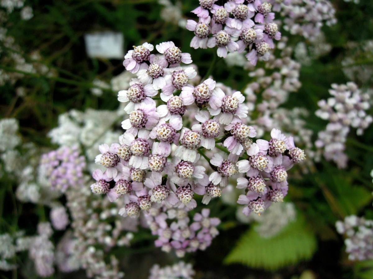 Tiny purple and white flower clusters