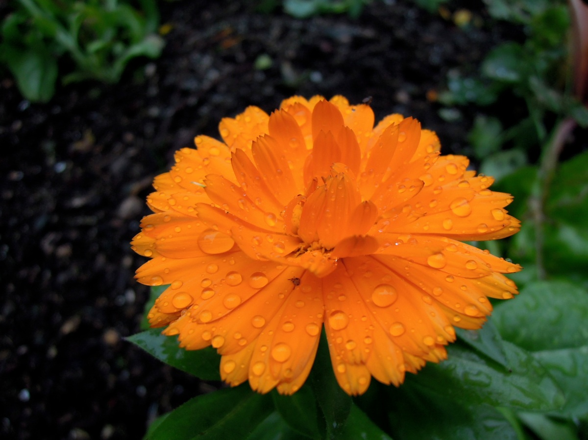 Orange flower with raindroplets