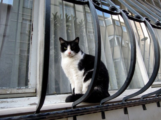 Black and white cat on an exterior windowsill