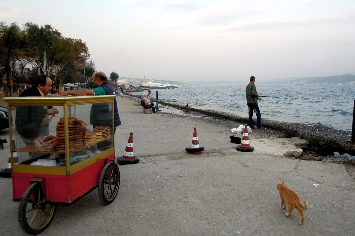 Bosphorus with kitties and a street vendor selling donut-shaped breads