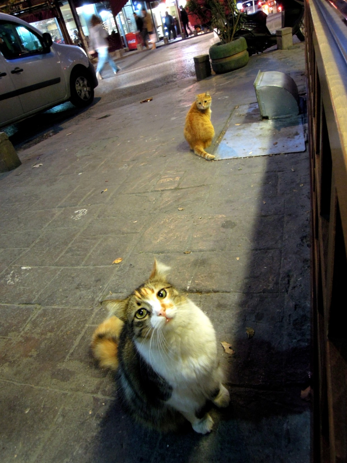 Two cats begging outside a restaurant