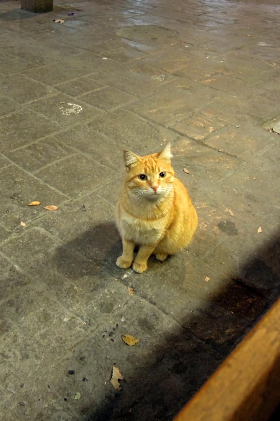 Orange cat with very cute face