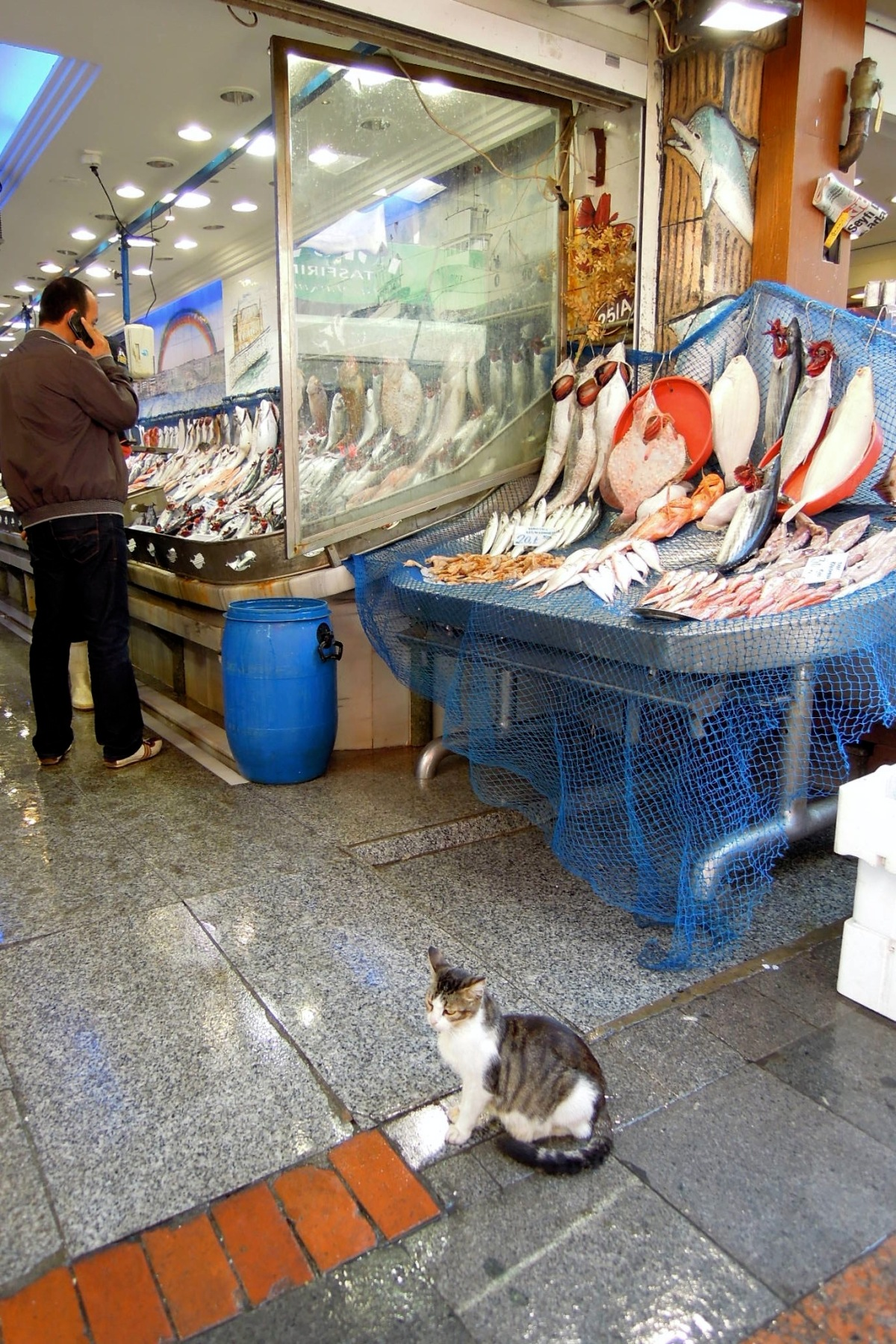 Fish stand with cat
