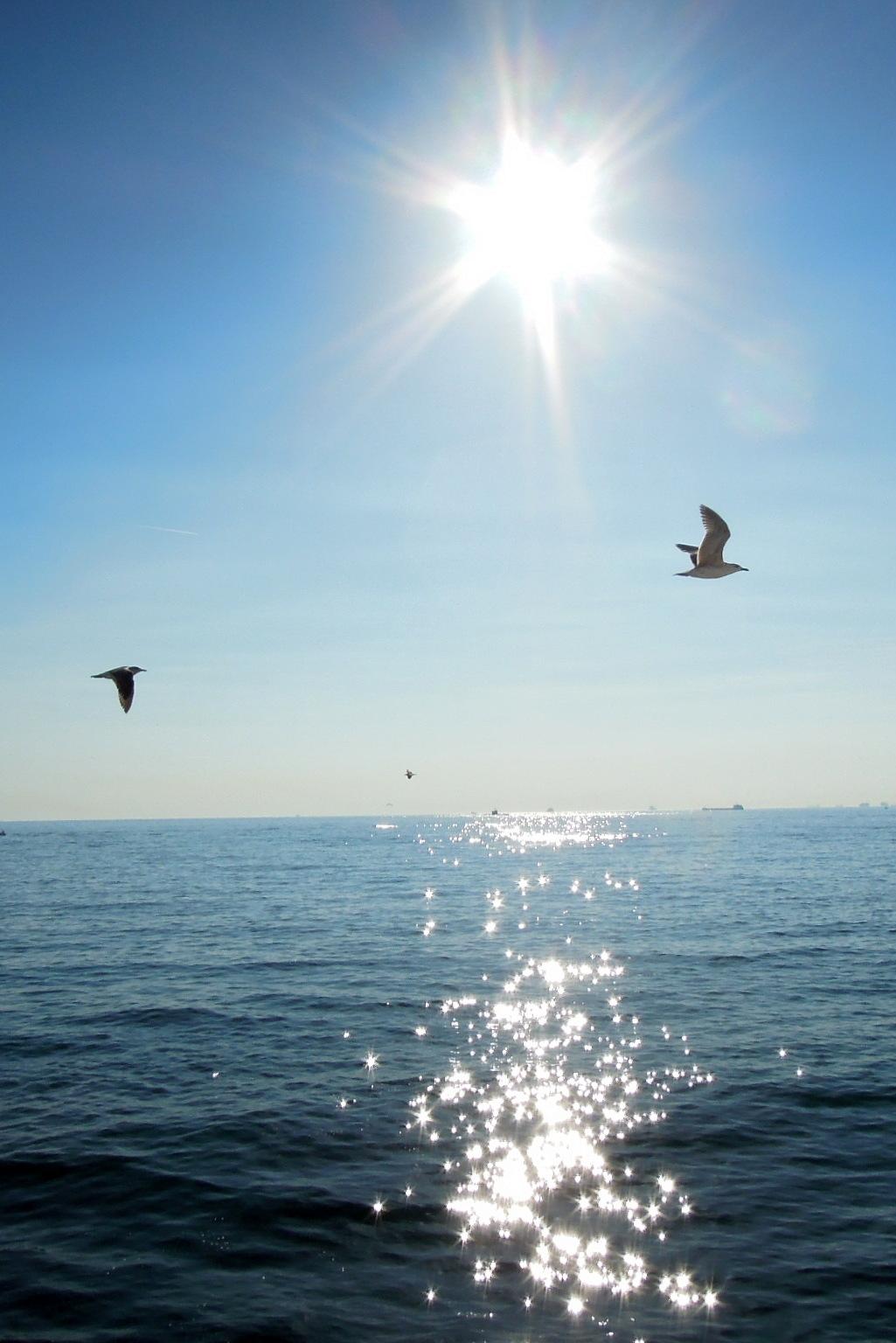 Birds over the Bosphorus