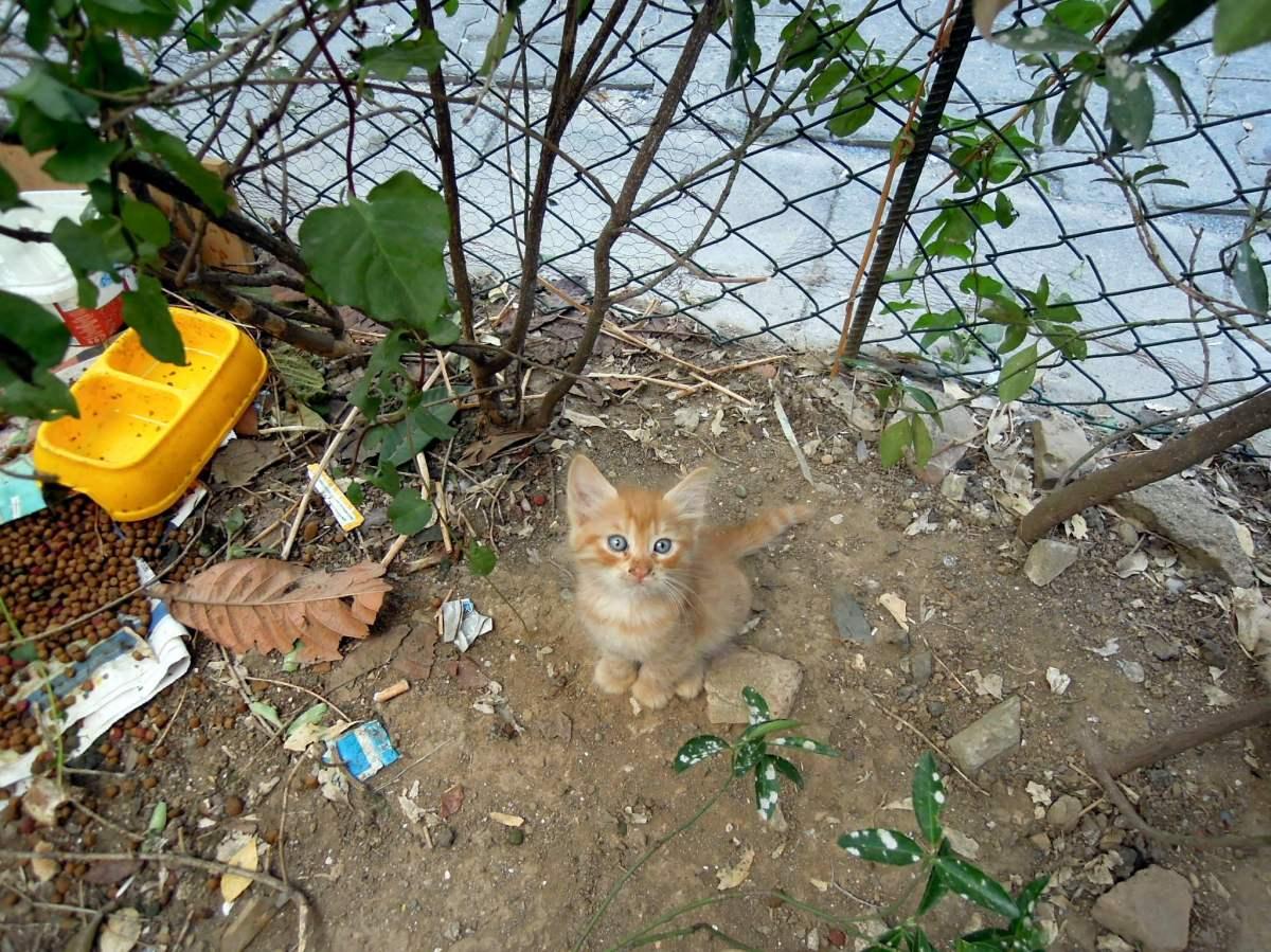 Orange kitten looking up at me