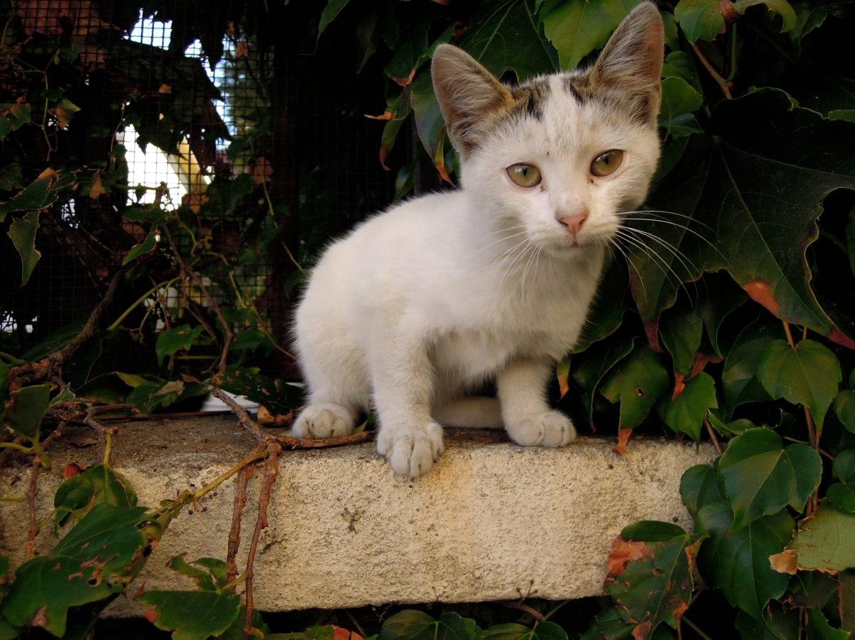 Plaintive-faced kitten
