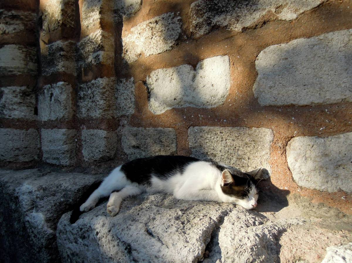 Sleeping cow-cat outside the church/museum