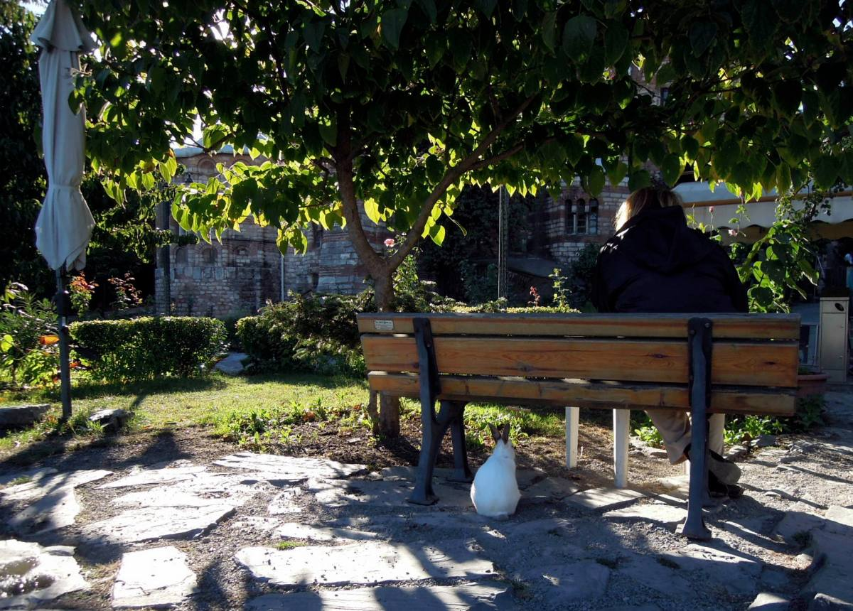 Fat grey-eared white rabbit sitting under a bench where a girl is reading