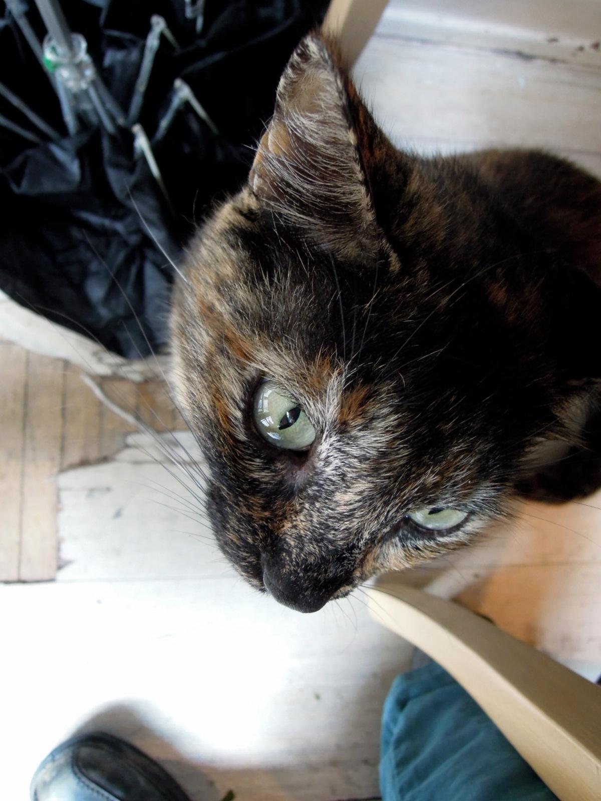 Tortoiseshell cat sitting under my chair