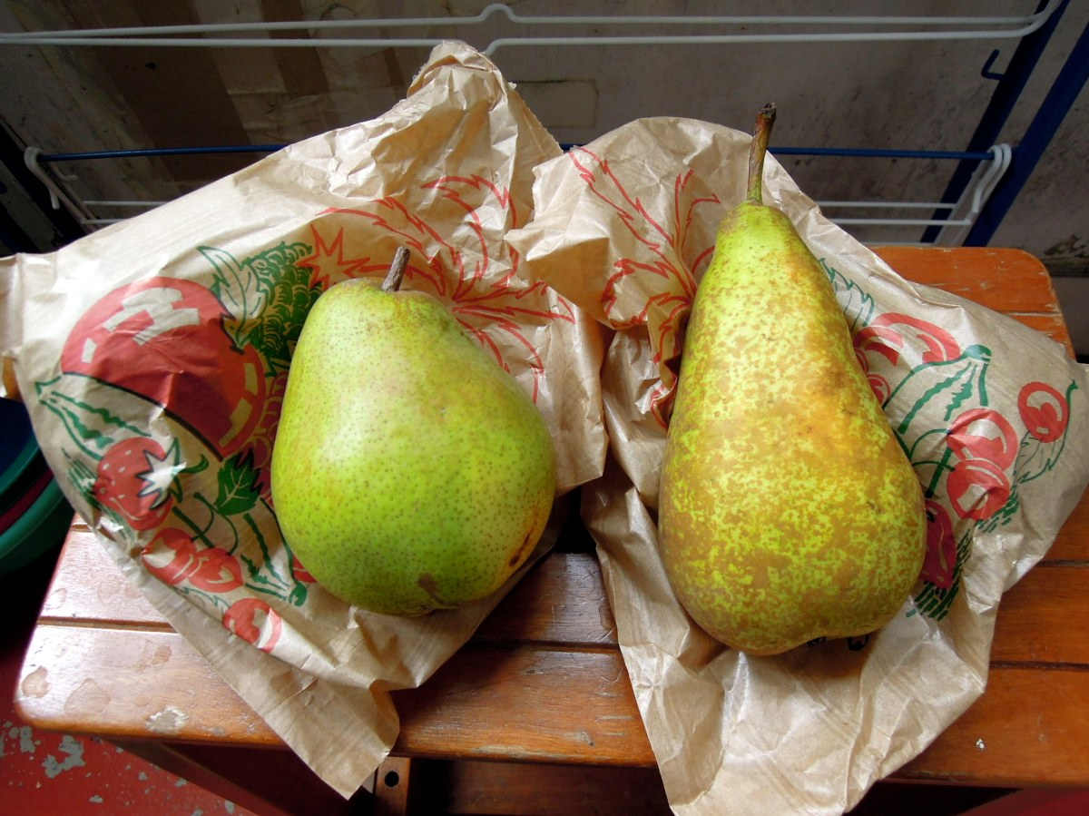 Comice and Conference pears