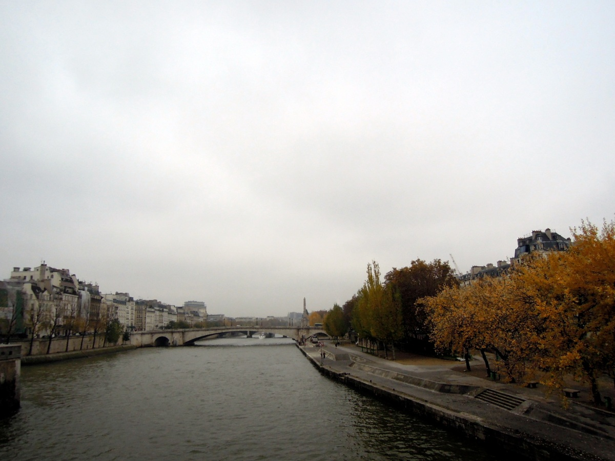 Autumn-hued trees along the Seine