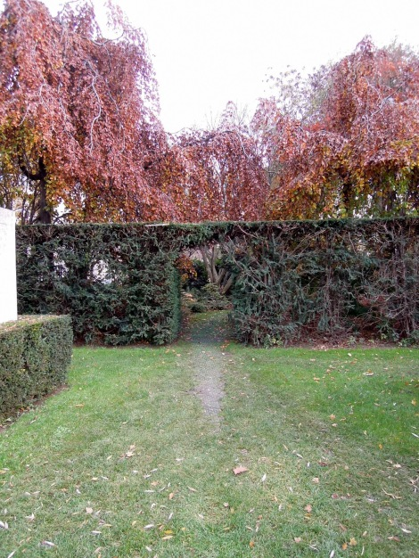 Hedge with a gap in it