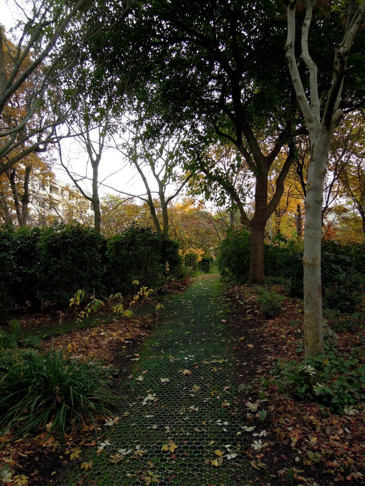 Autumnal grassy path
