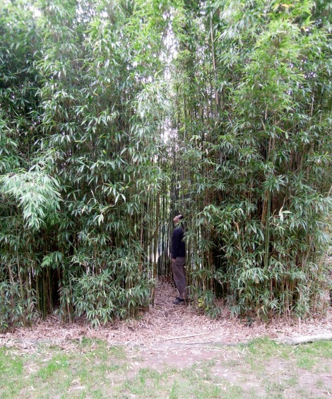 Erik in a bamboo grove