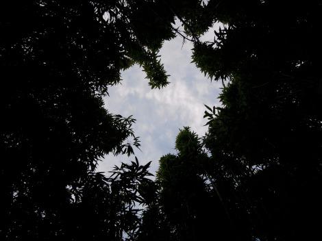 Blue sky through trees