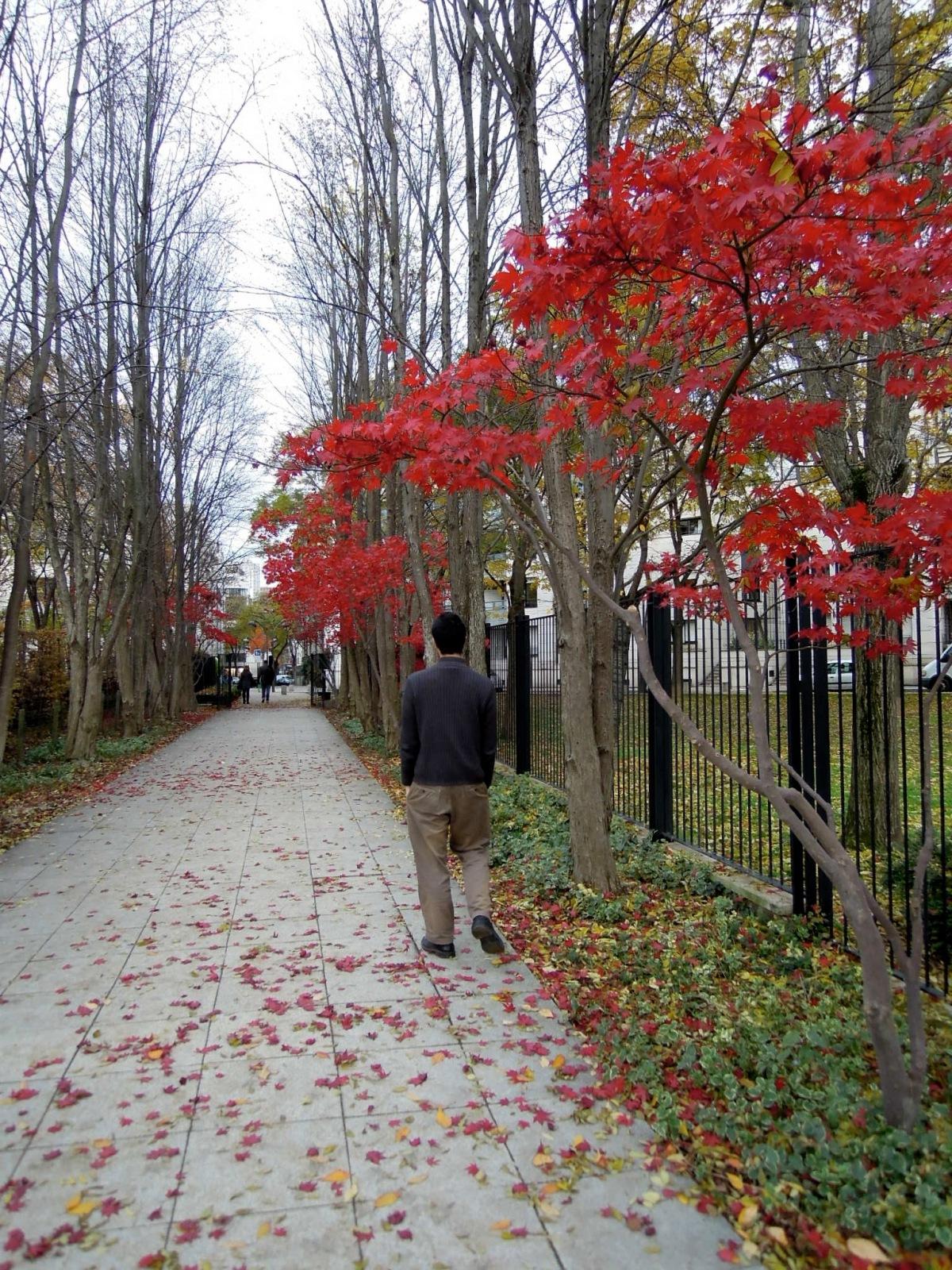 Vivid red leaves