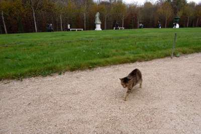 Cat at Versailles gardens