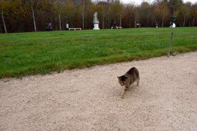 Cat at Versailles gardens