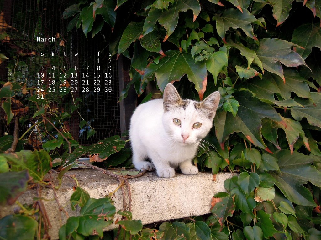 March, from the Cats calendar