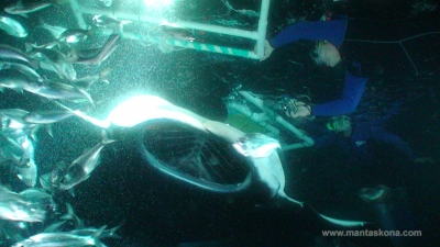 Manta ray and snorkelers