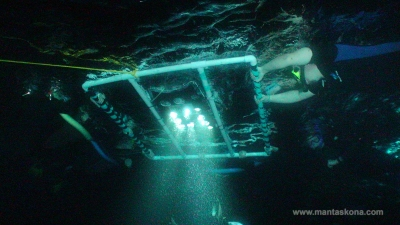 Snorkelers with powerful lights to attract plankton