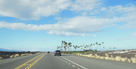 Resort palms amid the lava fields of the Kohala coast