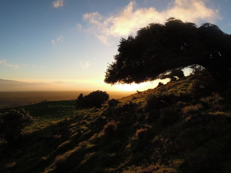 Silhouetted tree and rocky hillside