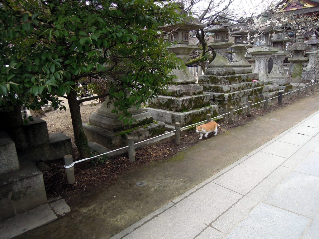 First Kyoto kitty sighting!