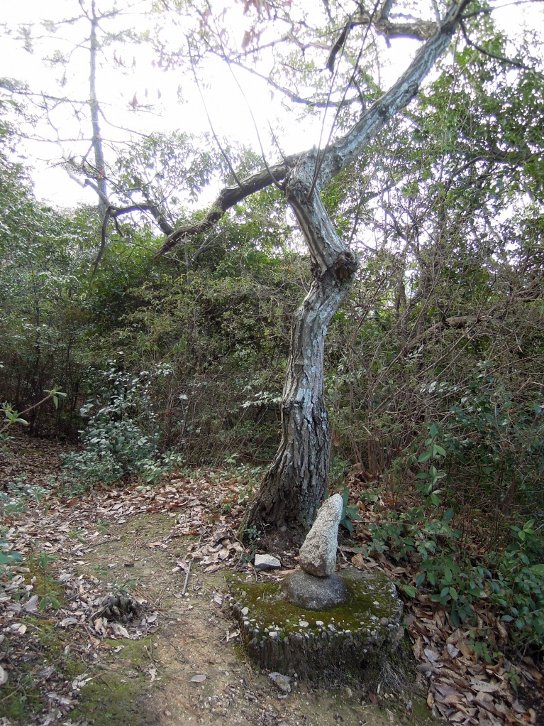 Tree with rock cairn (?) under it