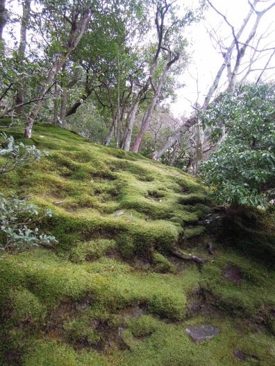 I love moss!