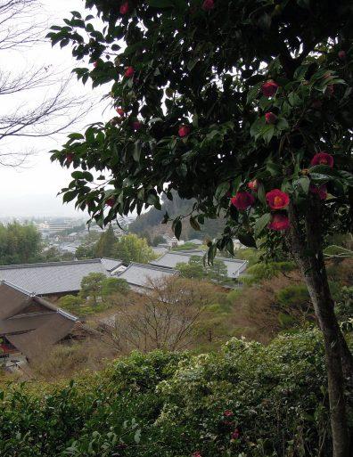 Camellias!