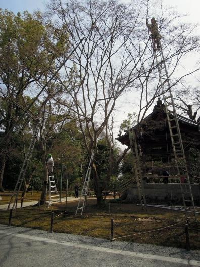 Tree maintenance!