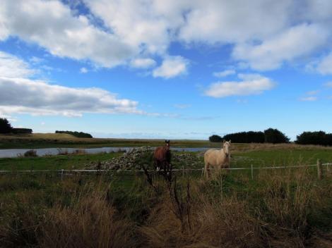 Horses on a beach, South Island, New Zealand