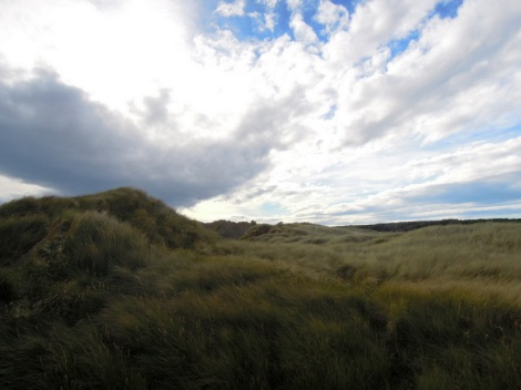 Grassy dunes, Oreti Beach, New Zealand