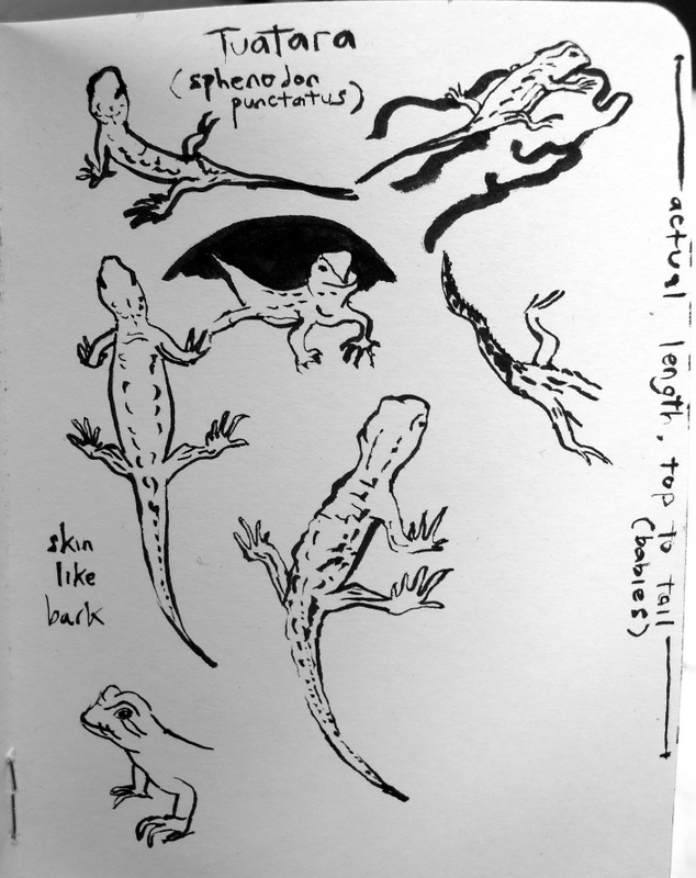 Sketches of tuatara