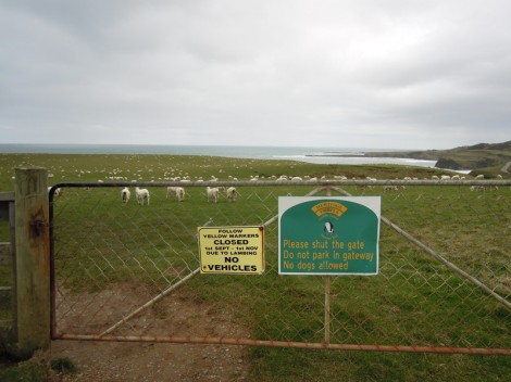 Signage and sheep at Slope Point, New Zealand