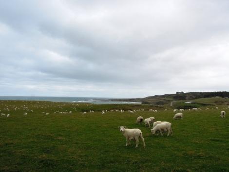 Sheep at Slope Point, New Zealand