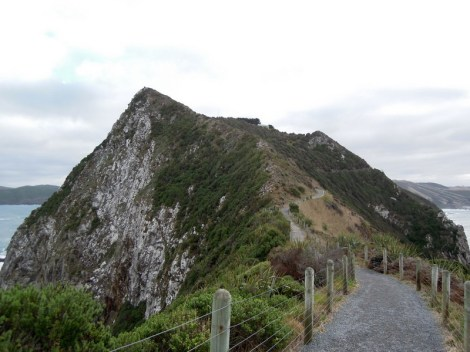 Trail, Nugget Point, New Zealand