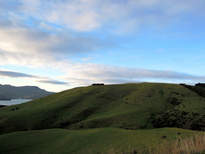 View from road to Larnach Castle, New Zealand