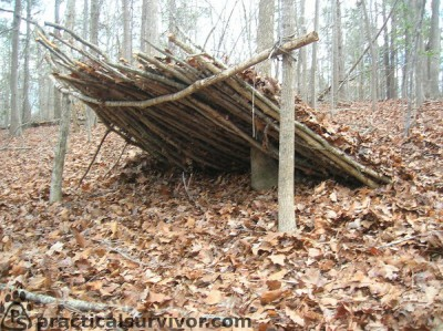 lean-to in autumn woods