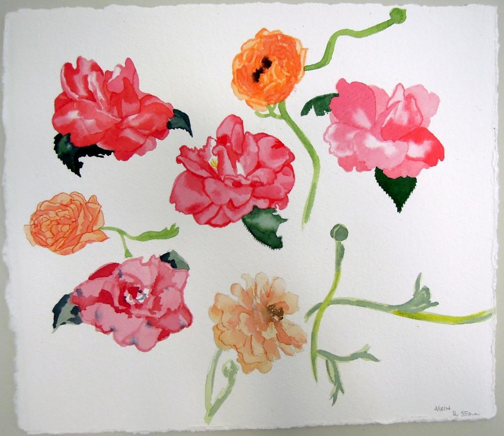 2014 Mar 18 - Camellia and ranunculus studies